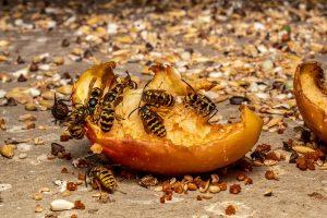 een wespennest verwijderen