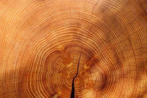 verantwoord hout